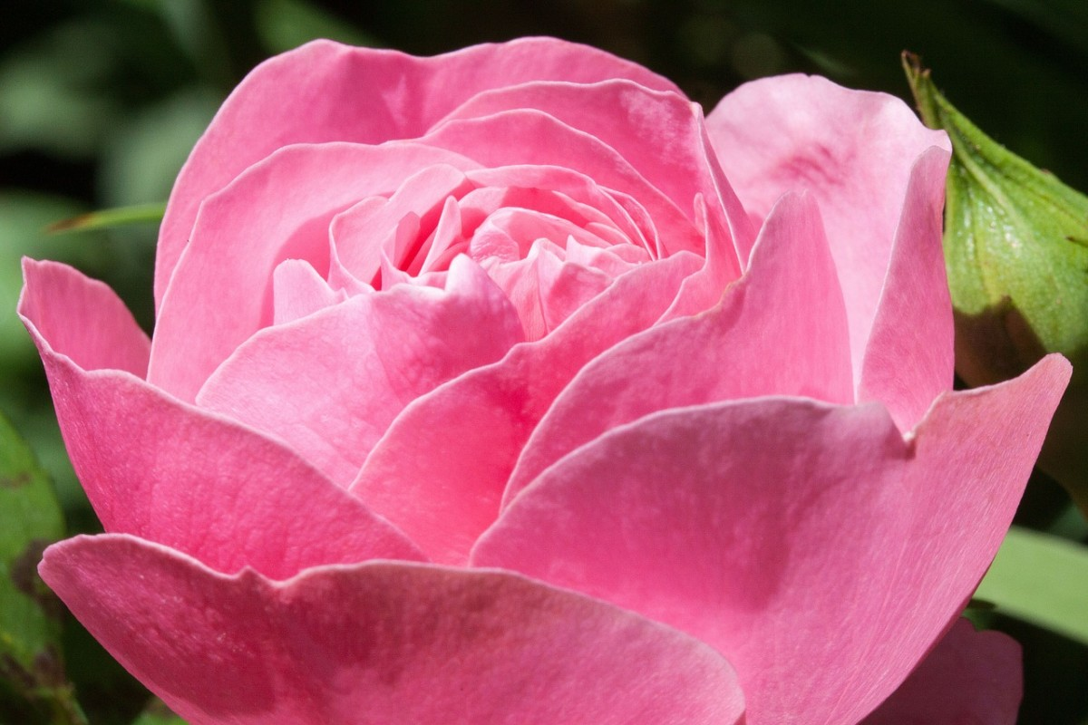 blomst