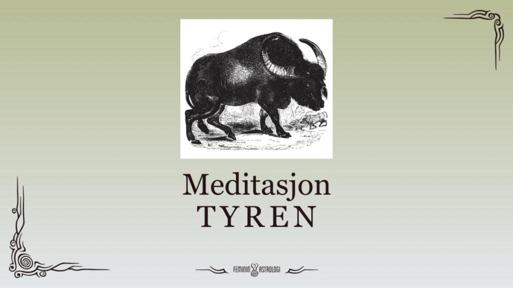 Meditasjon på tyren